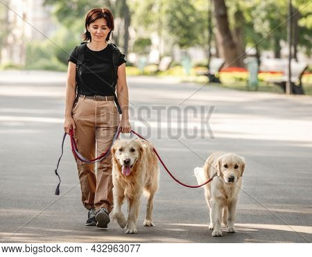 Beautiful girl walking with golden retriever dogs in the park. Young woman and two doggy pets outdoors at summer