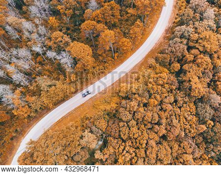 Aerial View Car On Road Forest Tree Environment Forest Nature Background, Texture Of Yellow Orange T