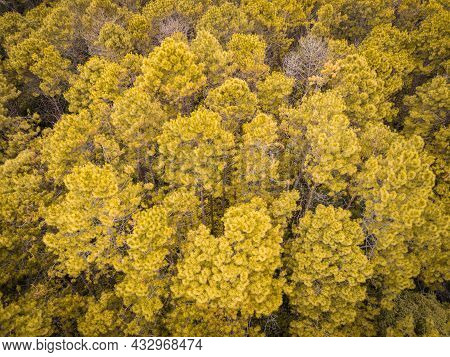 Aerial View Forest Tree Environment Forest Nature Background, Texture Of Yellow Orange Tree And Dead