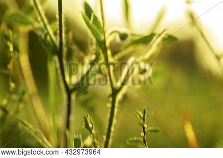 Blurred Abstract Nature Background .grass Meadow Blurred Background