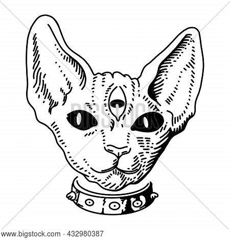 Vector Illustration Cat Art. Vintage Engraving. Vintage Style Beautiful Gothic Cat. Traditional Art
