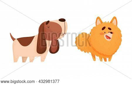 Funny Spaniel And Pomeranian Dog As Four-legged Friend And Domestic Pet Vector Set