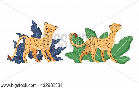 Spotted Leopard Or Jaguar With Yellow Skin Standing In Tropical Leaves Vector Set