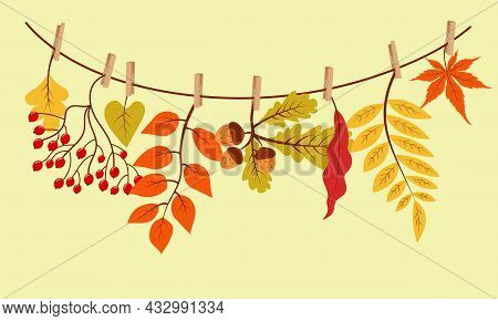 Autumn Gifts Hanging On The Rope Attached With Clothespin. Vector Illustration.