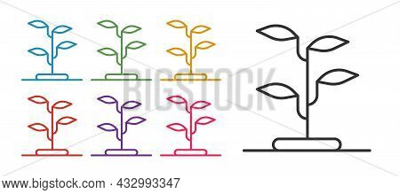 Set Line Sprout Icon Isolated On White Background. Seed And Seedling. Leaves Sign. Leaf Nature. Set