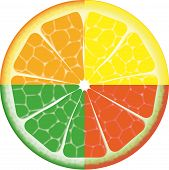 Illustration of multicolored isolated orange fruit on white background poster