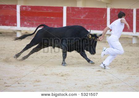 Saintes Maries De La Mer, La Camargue, Provence, France, Europe - October 29, 2008: Bullfight In The