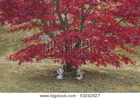 Autumn Cherubs