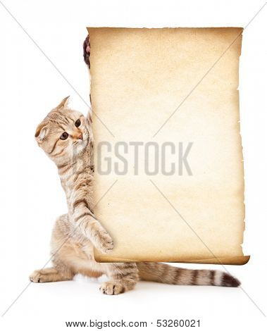 cat with old blank parchment or paper
