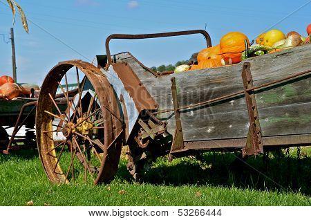 Autumn pumpkins displayed in an old manure spreader