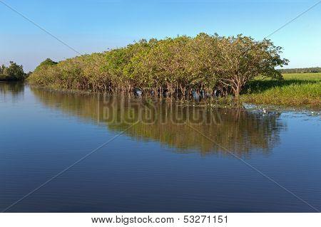 Trees with reflections, Yellow water billabong, Kakadu National Park, Northern Territory, Australia