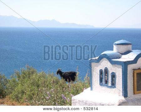 Black Sheep Watches The Sea