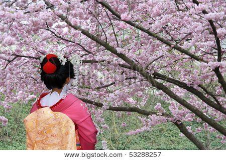 Geisha y floreciente árbol de Sakura