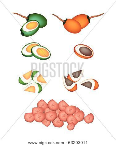 Set Of Areca Nut Fruit On White Background