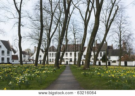 Beguinage Of Bruges And Daffodils In Early Spring 2014.