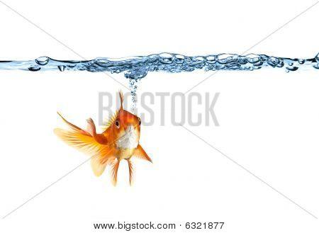 Goldfish Making Air Bubbles