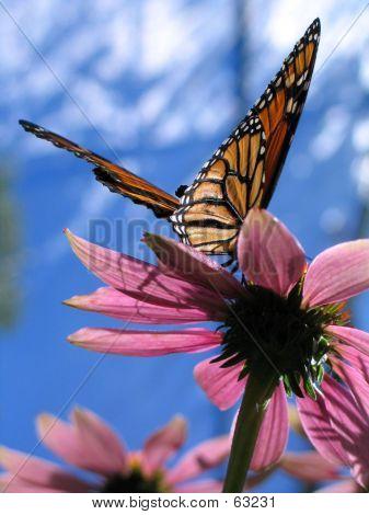 Landing Monarch