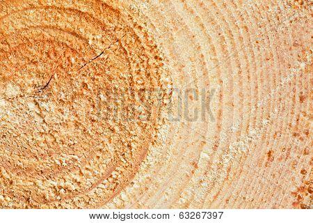 Annual Rings On Sawn Pine Tree Wood