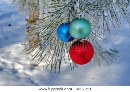 Three Colour Balls On A Pines Branch