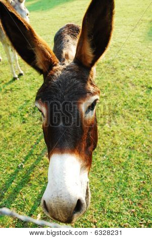 Donkey in a field of green grass