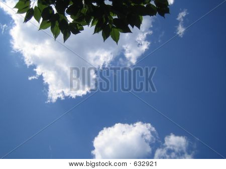 Clouds And Tree Leaves