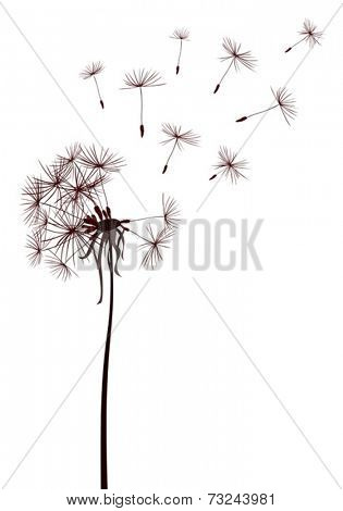 dandelion seeds flying in the wind