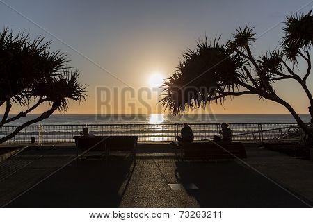 Gold Coast ocean sunrise, pandanus silhouettes