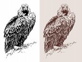 artwork of griffon vulture Aegypius monachus, known as the black vulture, monk vulture, or eurasian black vulture, black and white sketch digital drawing, and sepia version, vector illustration poster