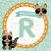 ABC animals R is raccoon. Childrens english alphabet. Vector poster