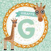 ABC animals G is giraffe. Childrens english alphabet. Vector illustration poster
