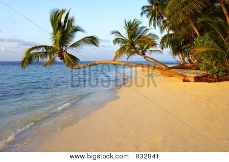 UNIQUE SUNSET BEACH WITH PALM TREES
