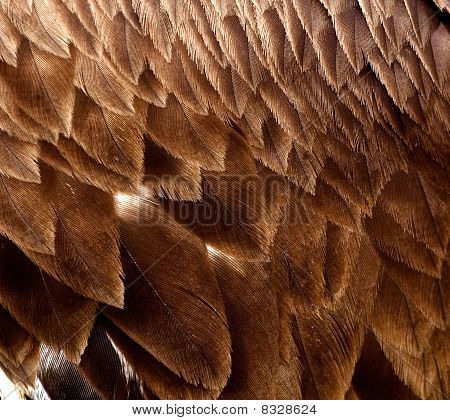 An big eagle feathers close up image poster