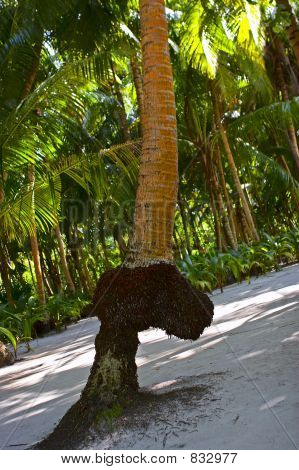 FANTASTIC PALM TREE