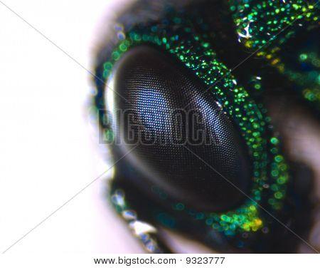 Fly Eye