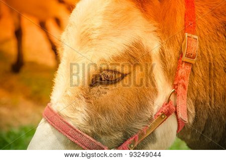 Head Of A Horse Of Brown Color