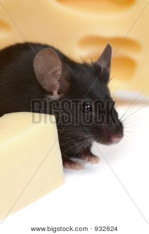 close up on little mouse and cheese poster