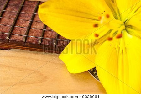 Lily On A Guitar