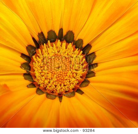 Vivid Yellow Flower 001