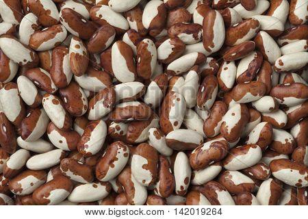 Dried snowcap beans full frame