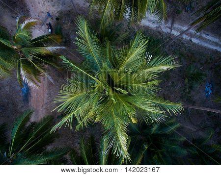 Jungle trees aerial view, Koh Phangan, Thailand