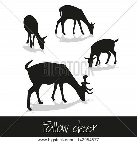 Feeding Fallow Deer Silhouette Of Animal Icons Eps10