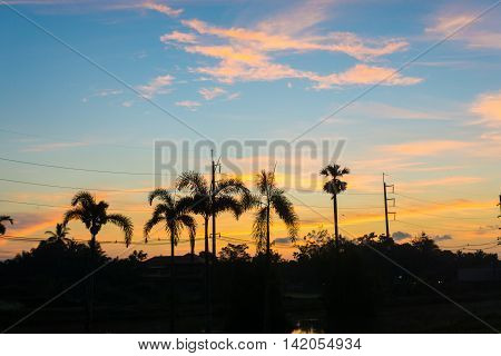 Colorful Clouds And Palm On Horizon At Sunrise