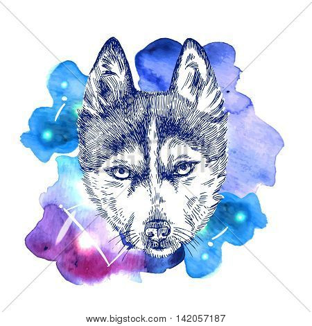 Beautiful hand drawn vector illustration sketching of husky on space watercolor background. Tattoo style drawing. Use for postcards, print for t-shirts, posters, case for smartphone