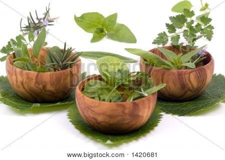 Herbs 012