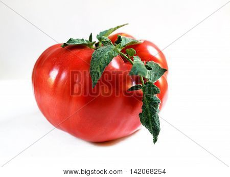 beautiful and juicy tomatoes on a white background photo for micro-stock