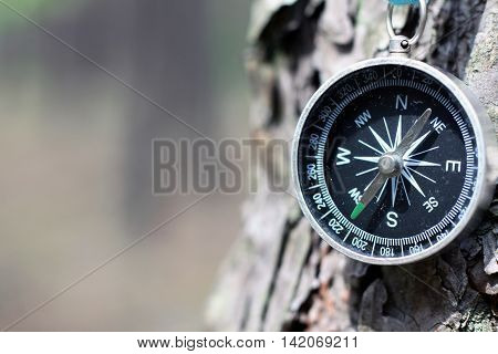 Old iron compass on tree in forest. Blurred background