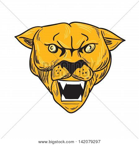 Drawing sketch style illustration of an angry cougar mountain lion head showing fangs viewed from front set on isolated white background.