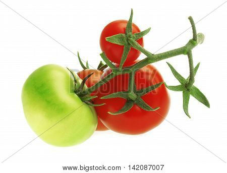 Branch with fresh red and green Tomatoes on a white bacground.