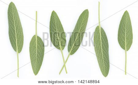 Sage Benefits Anti-inflammatory Antiseptic and antibacterial Reduces muscle tension Relieves indigestion Improve memory and arranged on a white background.