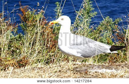 The Seagull on the ground